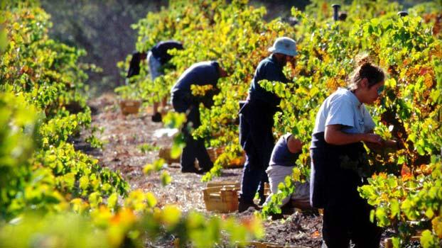 Kết quả hình ảnh cho Úc áp thuế với doanh nghiệp thuê lao động nước ngoài