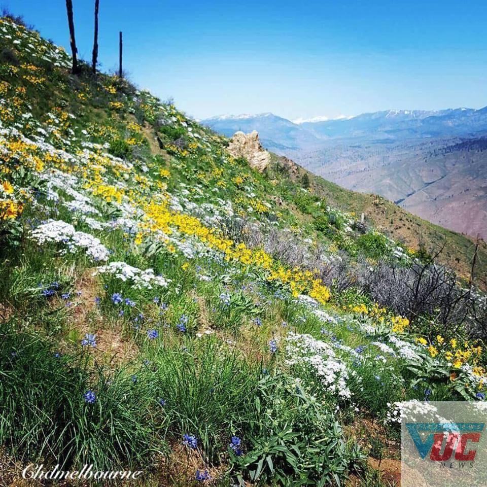 1n - Những cánh đồng hoa cỏ dại đẹp ngất ngây tại bang Victoria