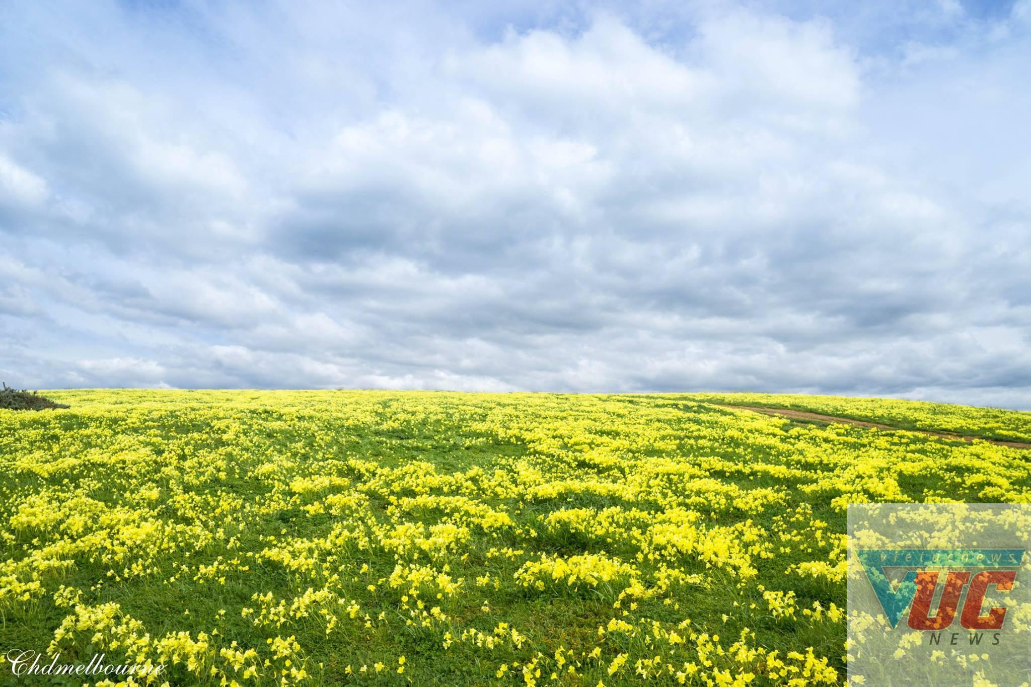 6 - Những cánh đồng hoa cỏ dại đẹp ngất ngây tại bang Victoria