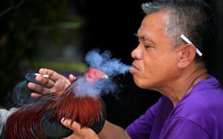 Tỷ lệ dân Philippines hút thuốc là khá cao