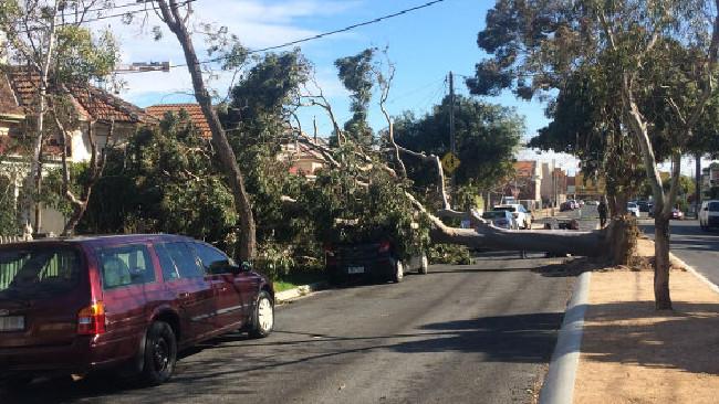gio manh tan pha melbourne 2 - Gió mạnh tàn phá Melbourne